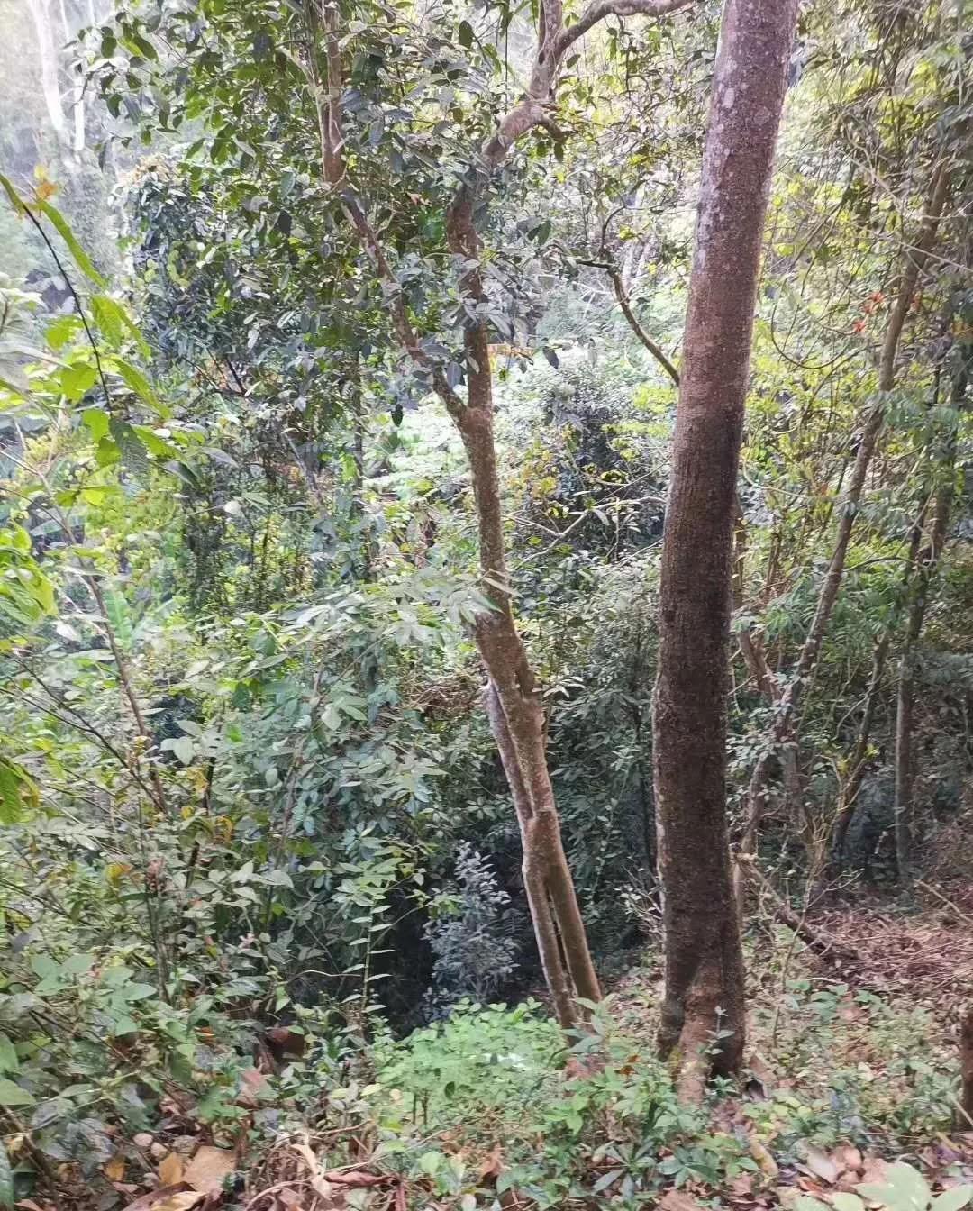 易武铜箐河